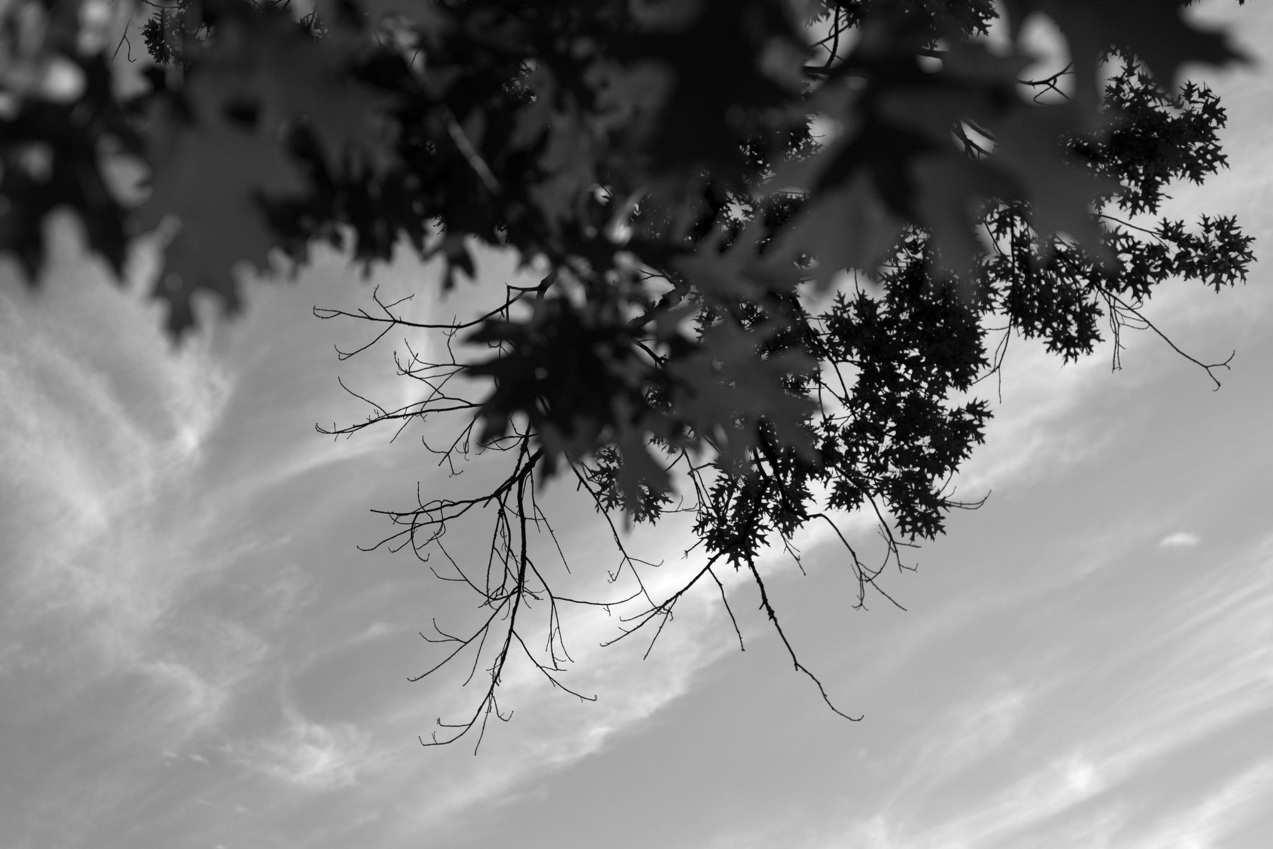 Silverwood Canopy Project 1_DSC6303.jpg