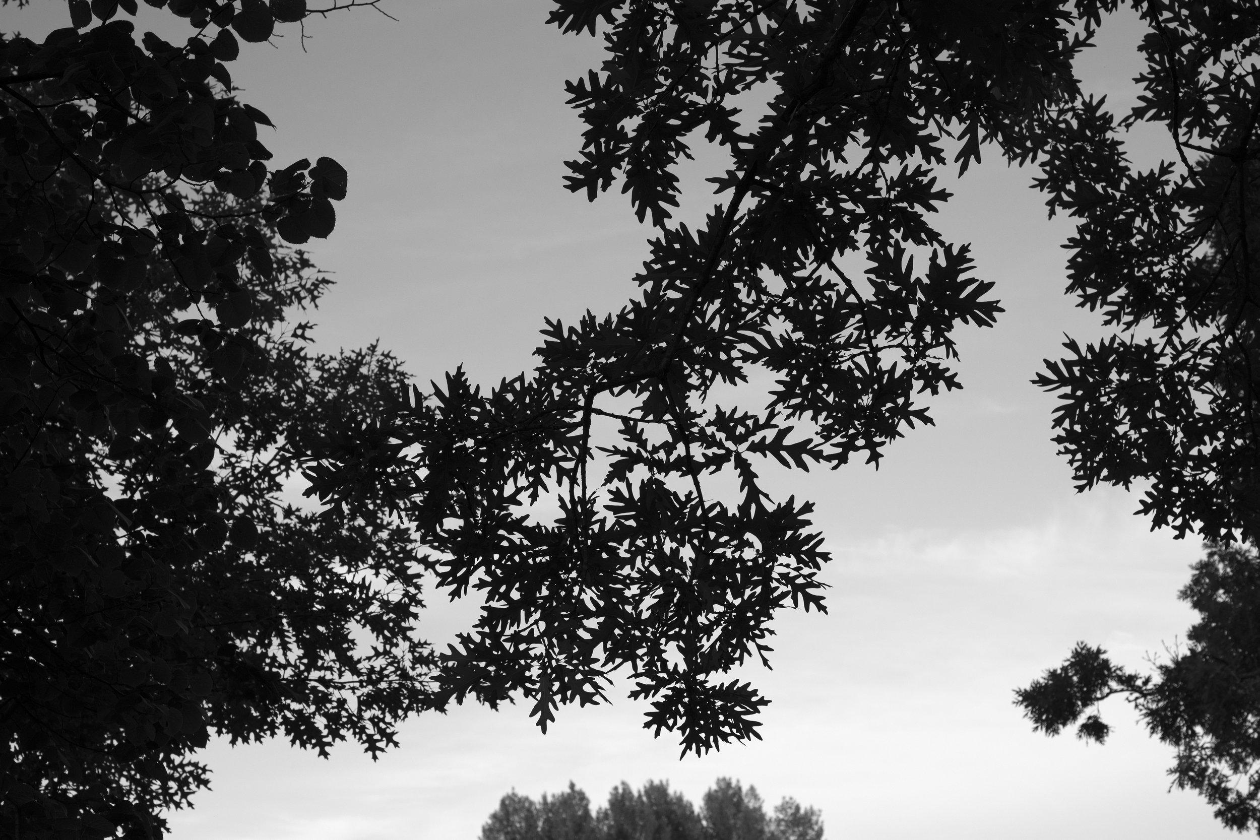 Silverwood Canopy Project_DSC6238.jpg