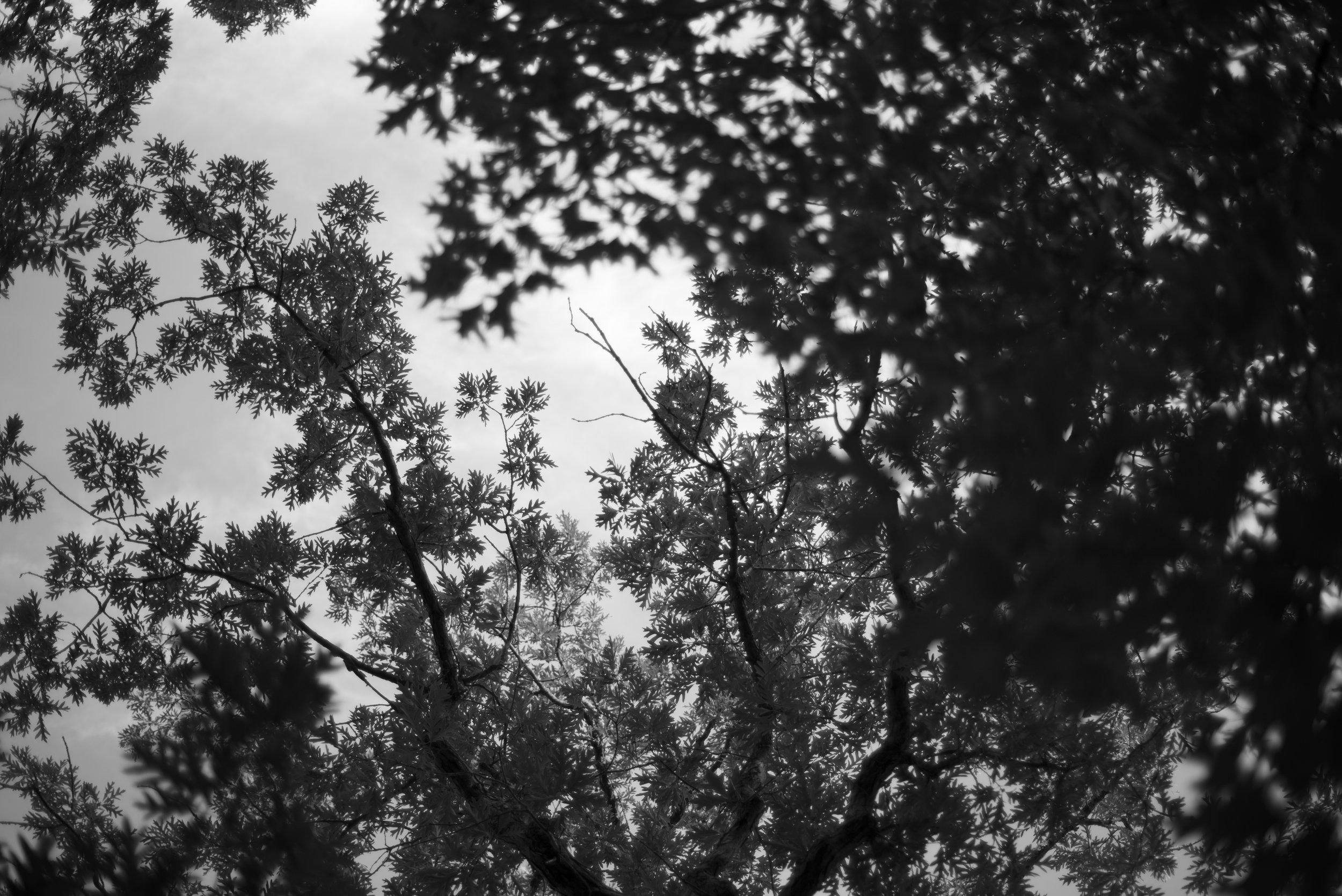 Silverwood Canopy Project_DSC6277.jpg