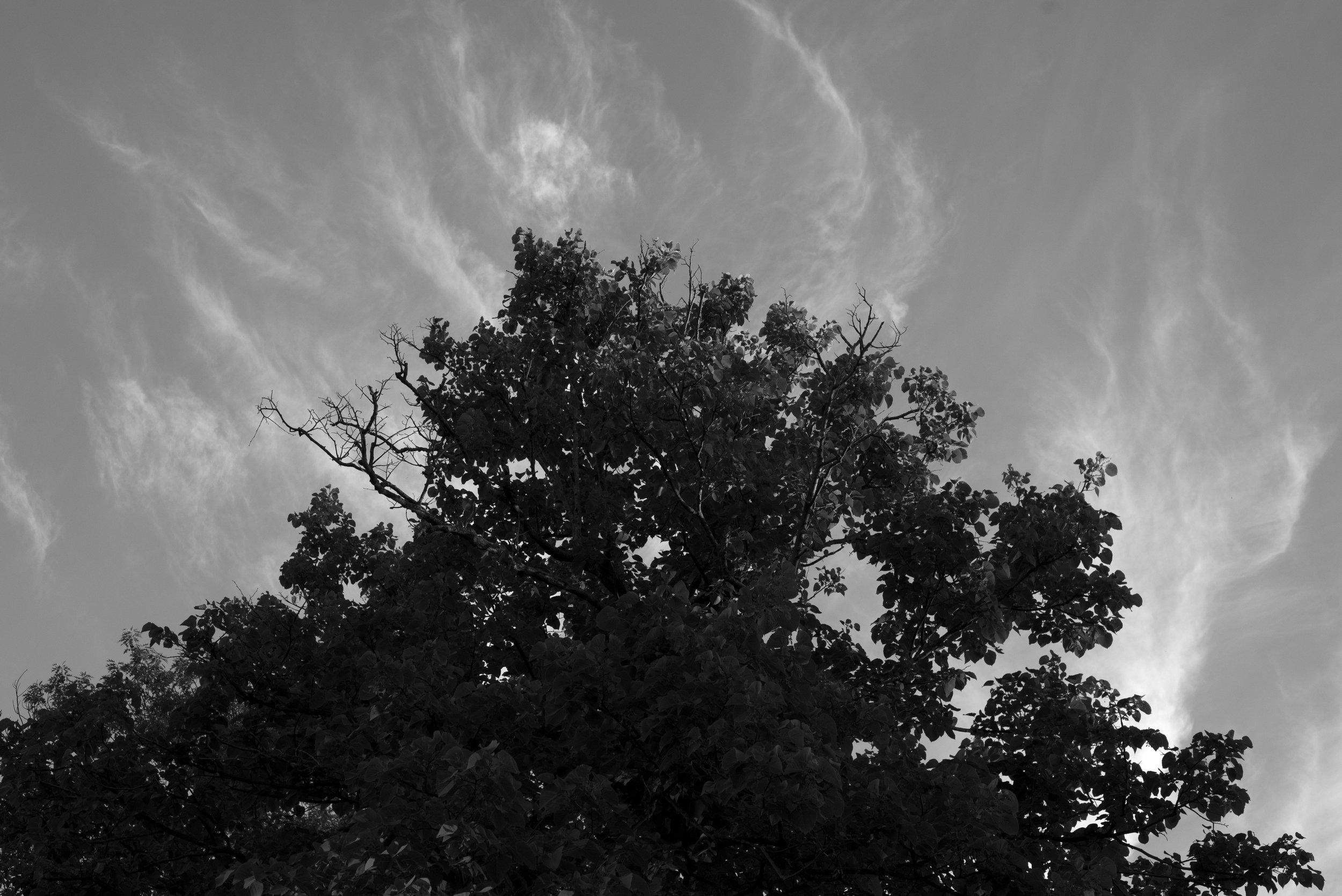 Silverwood Canopy Project_DSC6348 BB.jpg