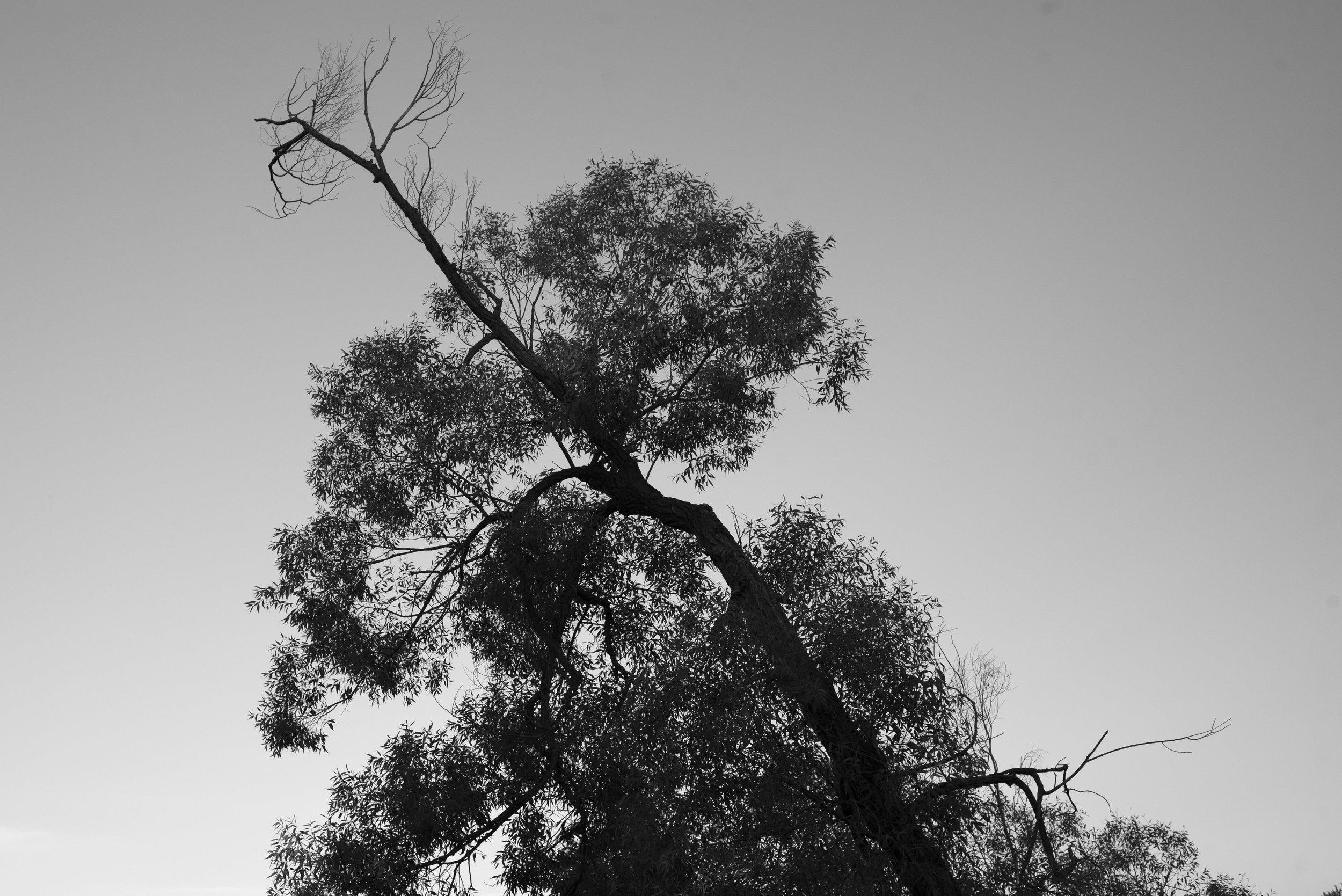 Silverwood Canopy Project_DSC6359.jpg