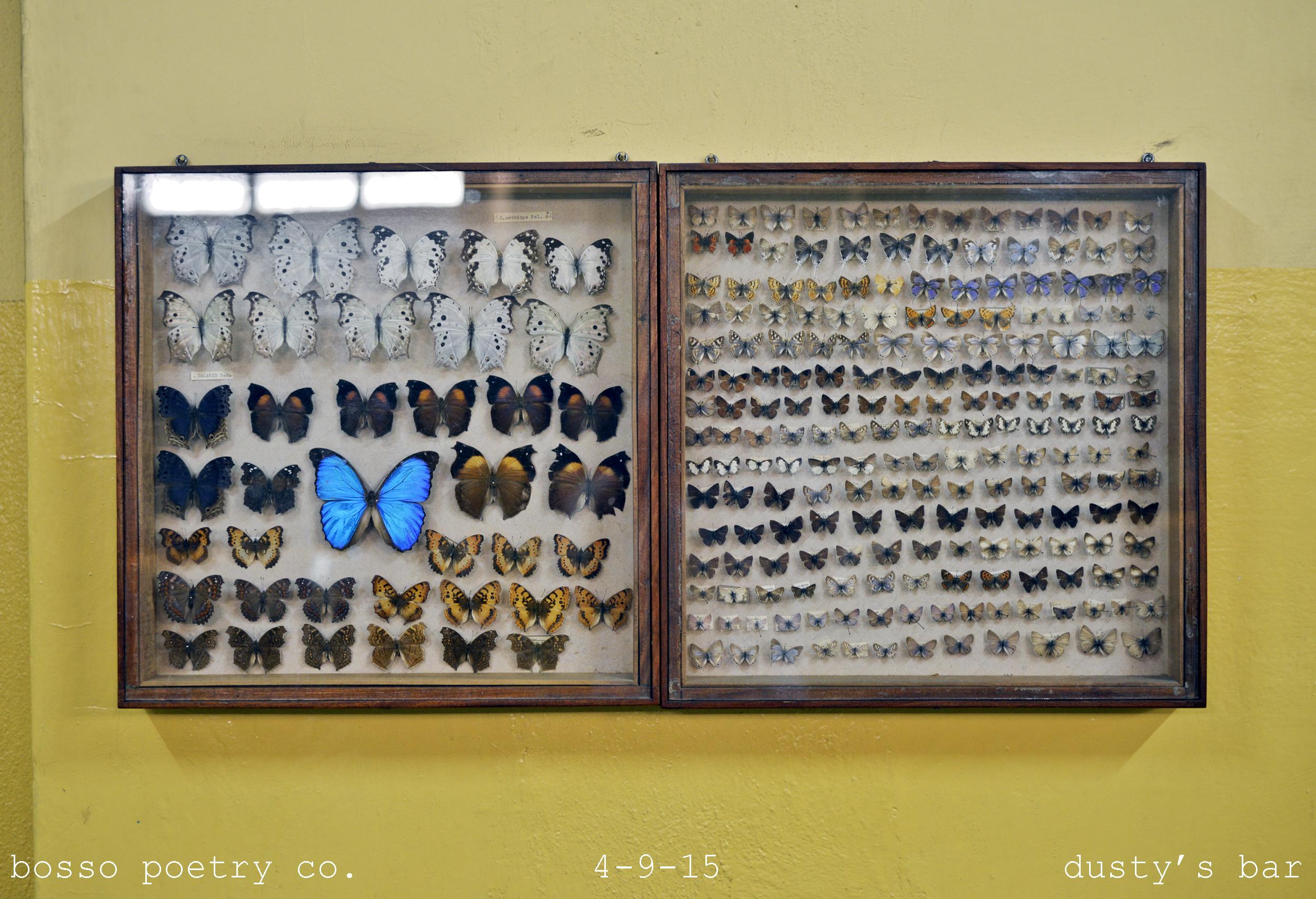 Bosso  4-9-15 ?_Butterflies _DSC3636 (2500).jpg