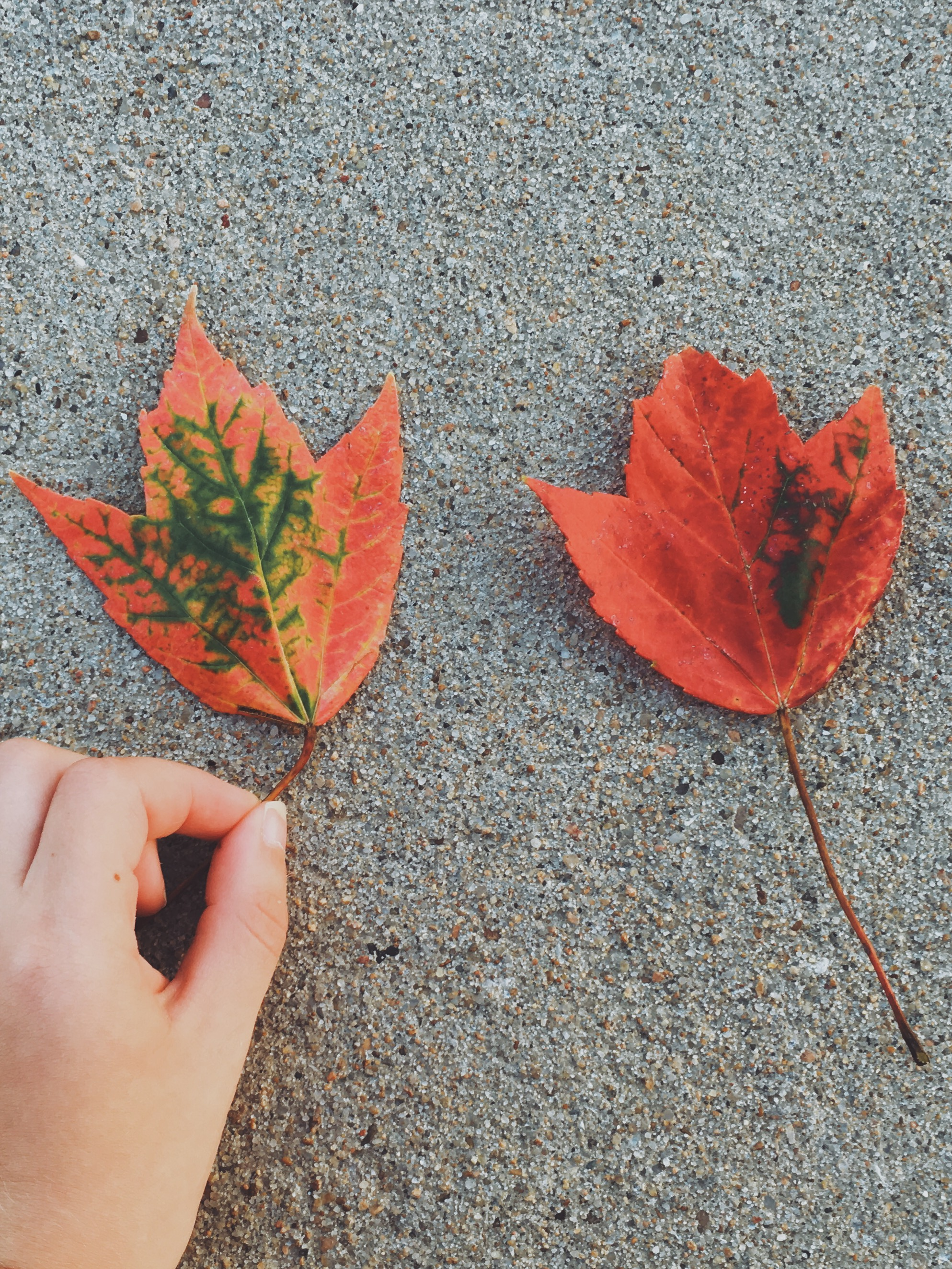 Our sweet niece and her leaves (Kansas, September)