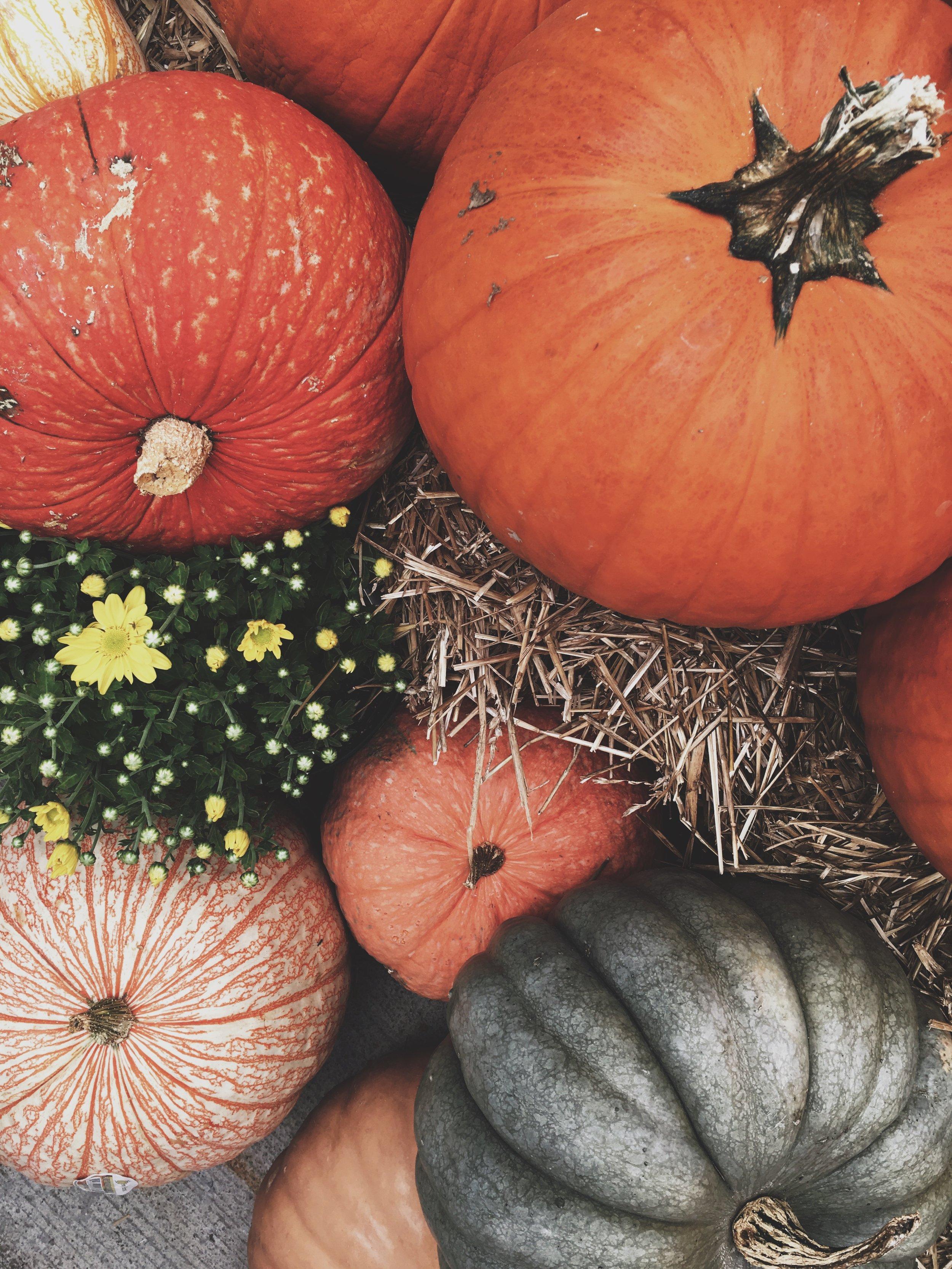 Pumpkins, fancy and regular!