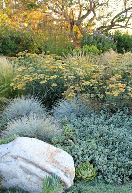 This is our goal - perennials with succulents sprinkled around