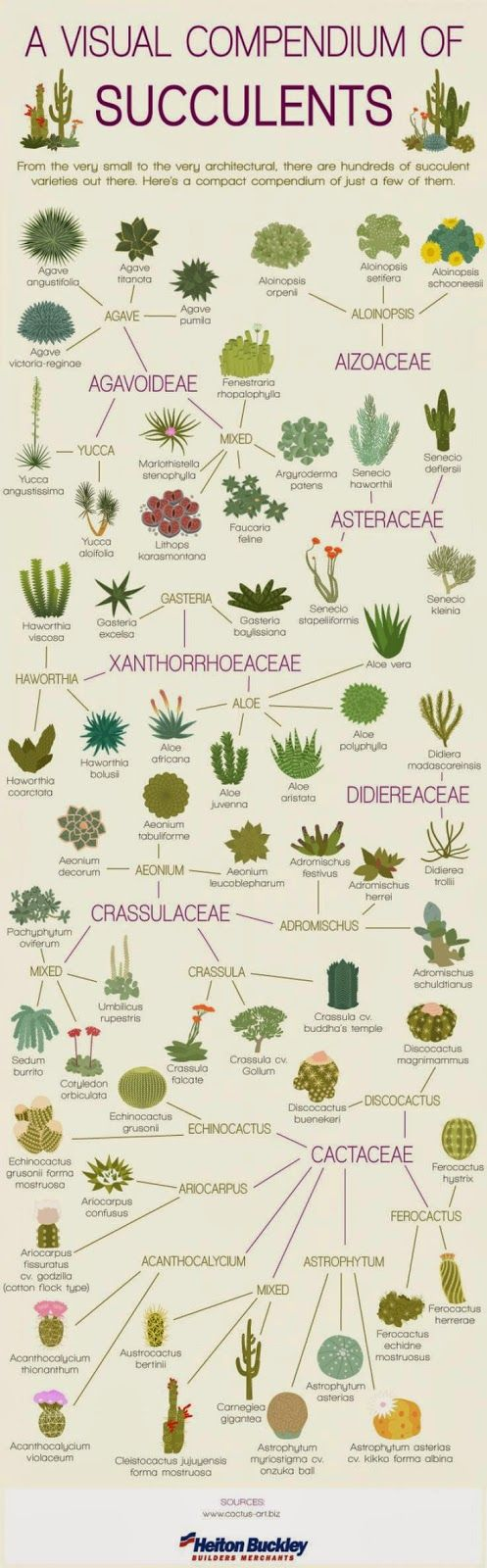 The Ultimate Houseplant Guide — H u r d & H o n e y on succulent toes, succulent id, succulent pallet wall, succulent varieties, succulent wall decor, succulent wall letters, succulent vines, succulent plants, succulent ivy, succulent living wall, succulent pig, succulent with pink flowers, succulent leaves,
