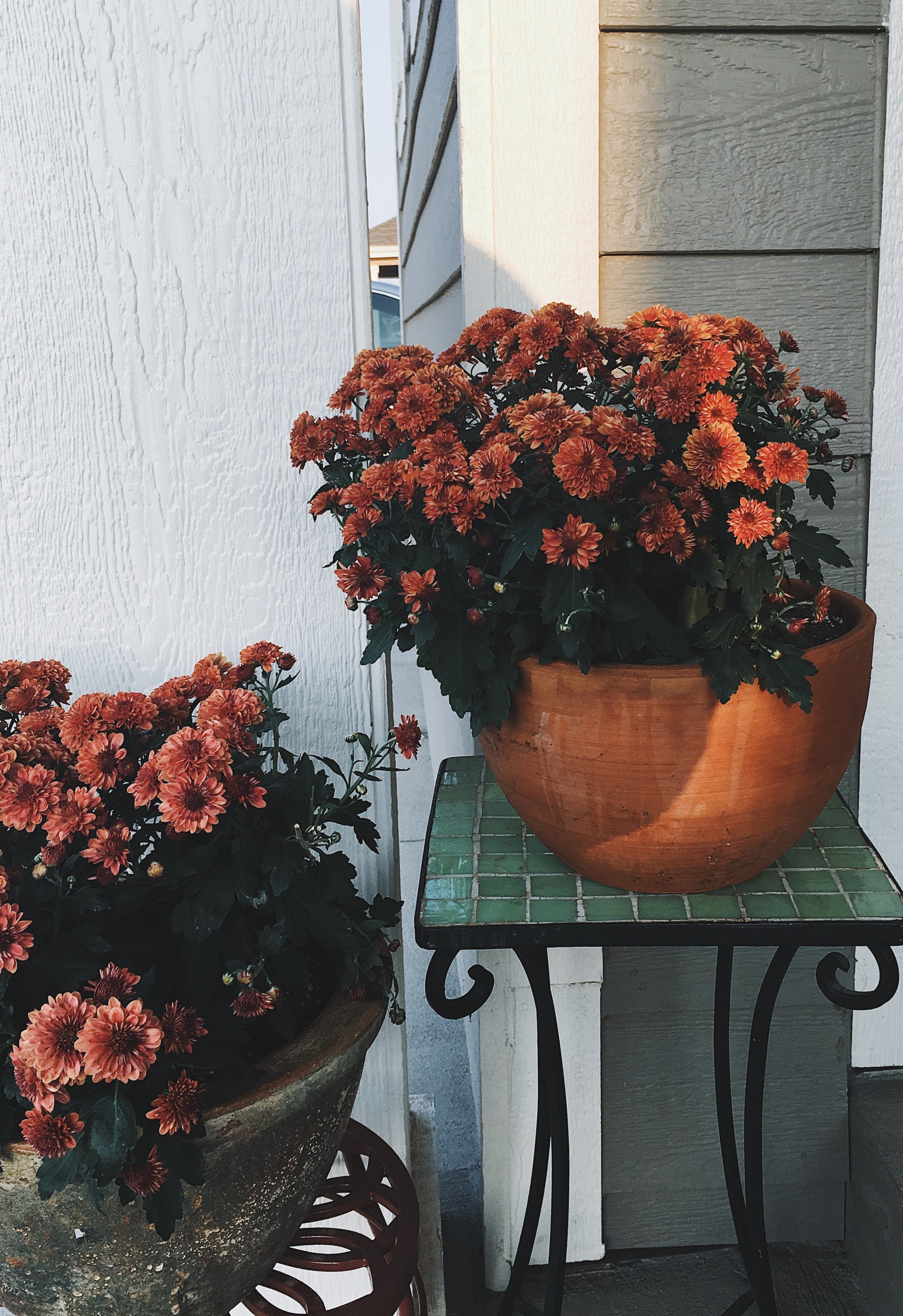 Watering the flowers in the morning