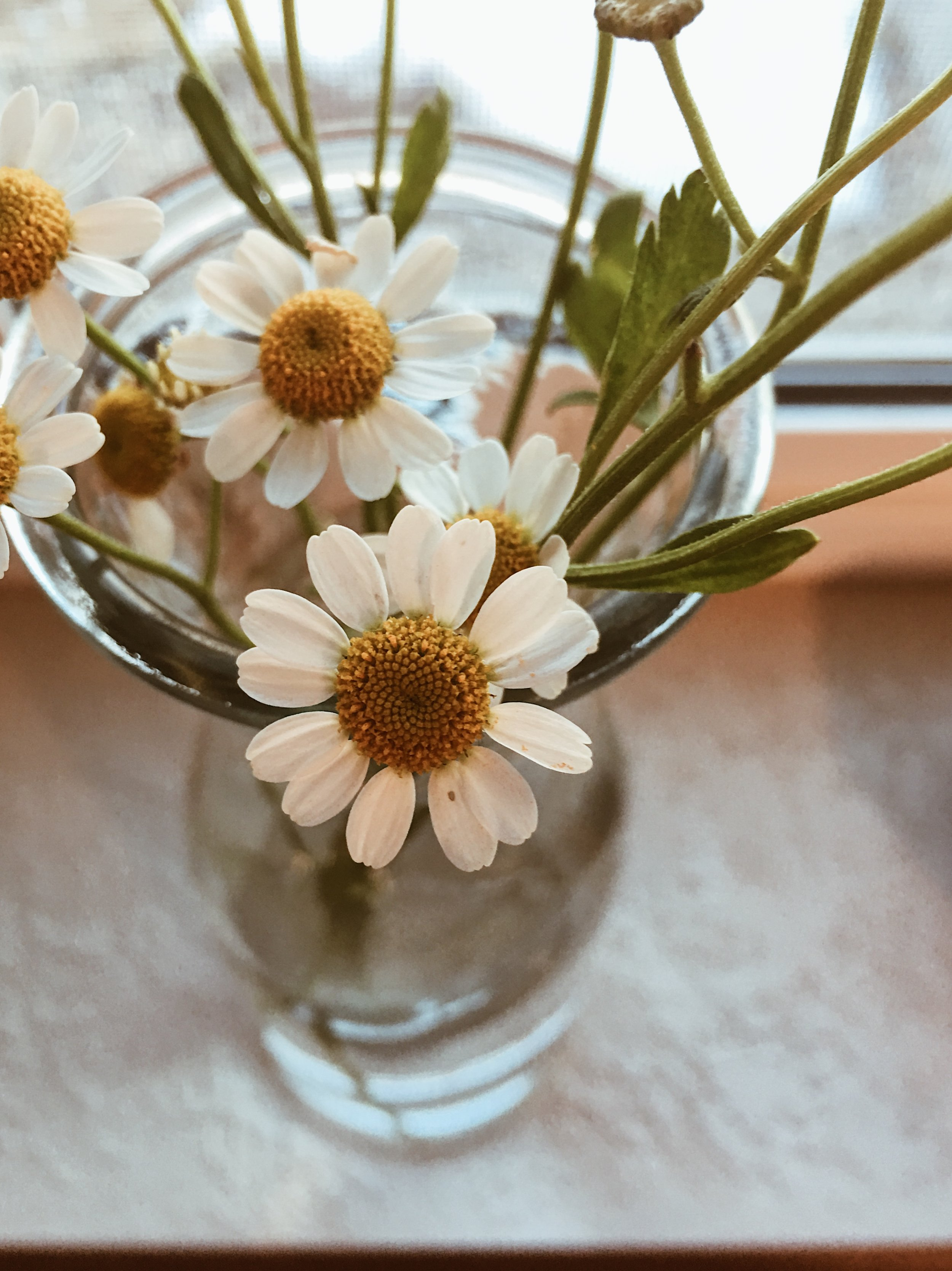 Chamomile Flowers - Calming