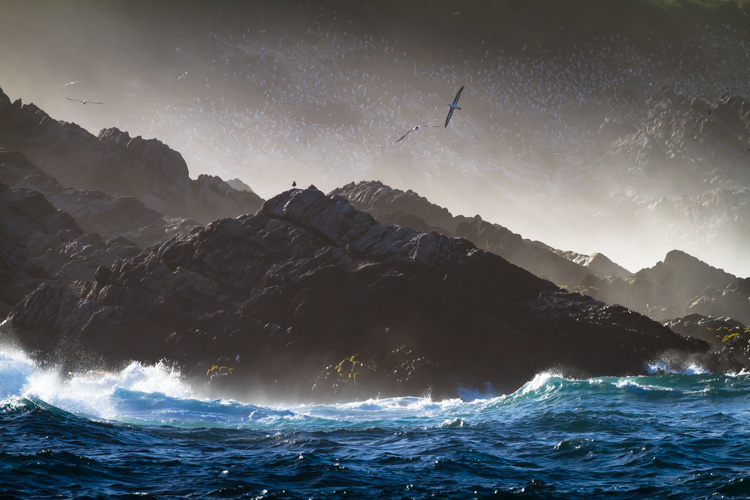 Я 20 хвилин тримав у руках великий об'єктив, щоб зняти альбатроса в профіль над хвилями.