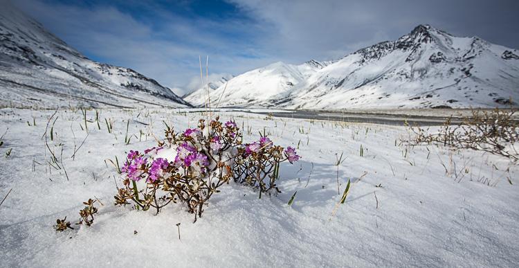 Показове протиставлення - сніг та квіти