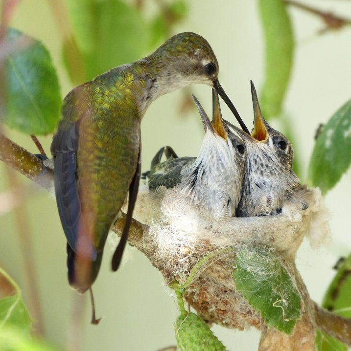 фотоMike's Birds