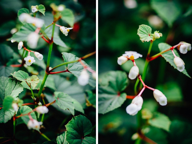 botanical-low-light.jpg