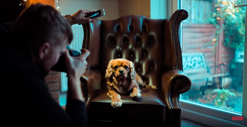 Phil-Andrew-Harris-10-Camera-Hacks-for-Dog-Photography-2.jpg