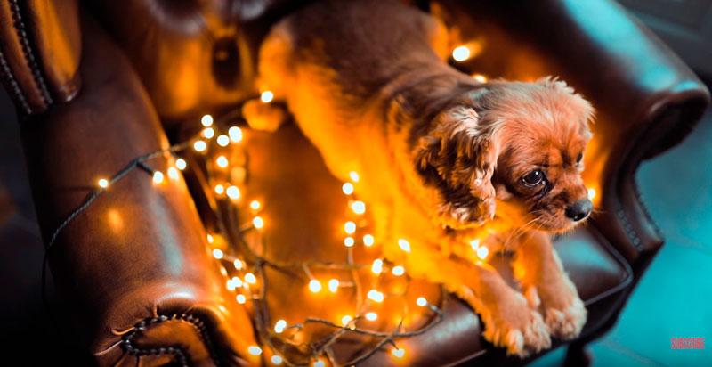 Phil-Andrew-Harris-10-Camera-Hacks-for-Dog-Photography-6.jpg