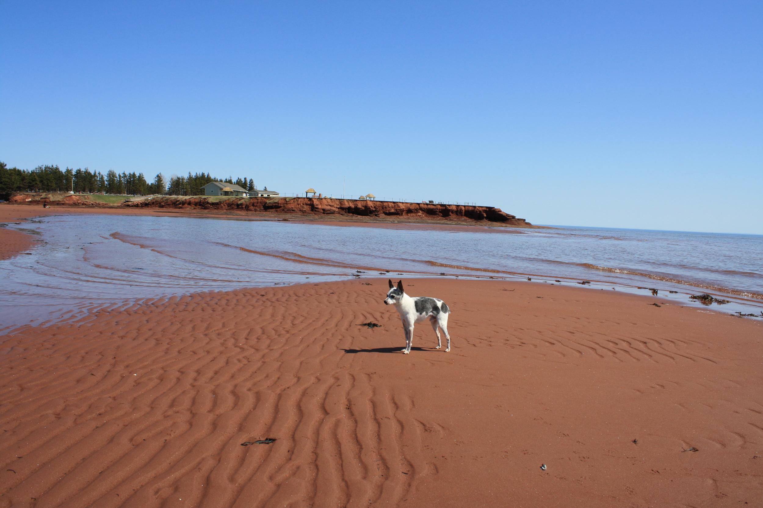 Santosh meets the Red Sand of Canoe Cove, P.E.I.