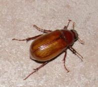 June-Bug.jpg
