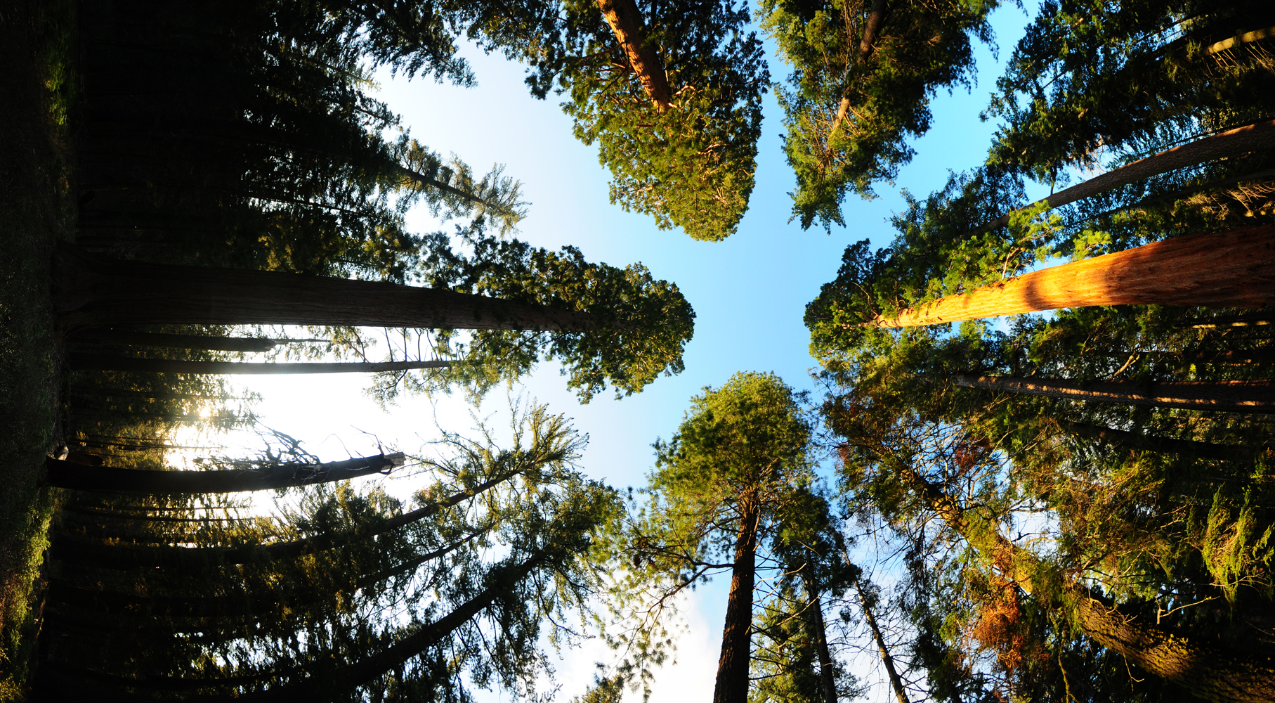 Up and over sequoia 1.jpg