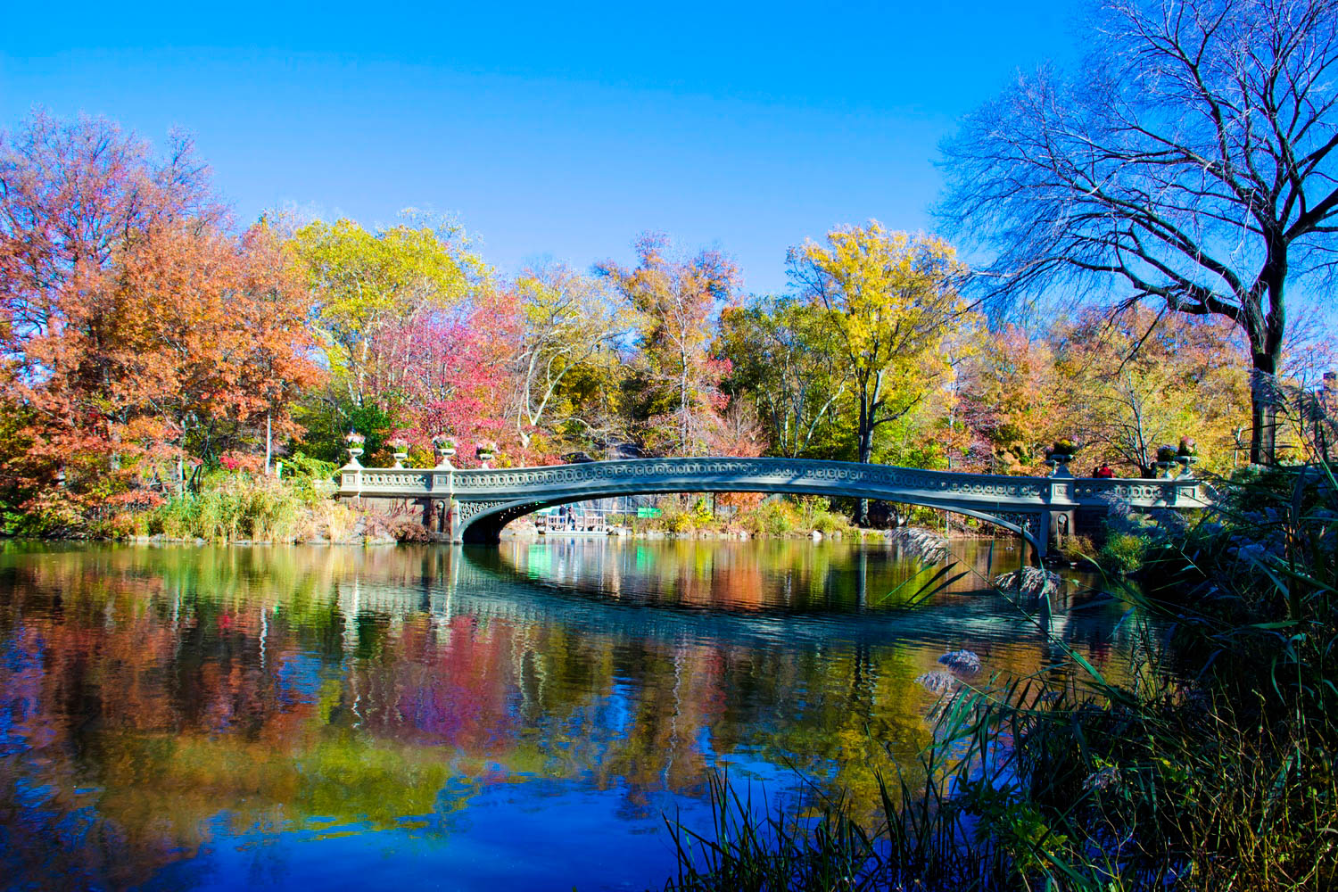 Bow Bridge, Central Park, Manhattan, New York