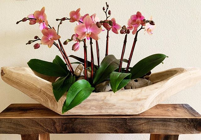 Gorgeous wooden trough filled with dusty pink phalaenopsis for sale.  Perfect for an entry or dining room table. Can then be refilled with seasonal pretties. Local Bay Area only $290.