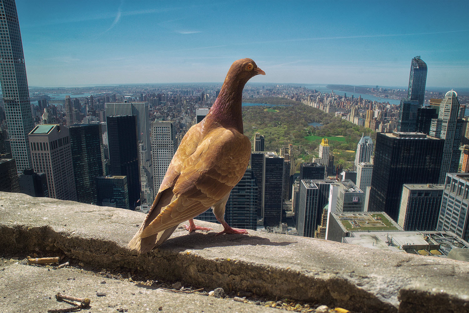 On Top of the Rock, NYC. Image by LocalPigeon