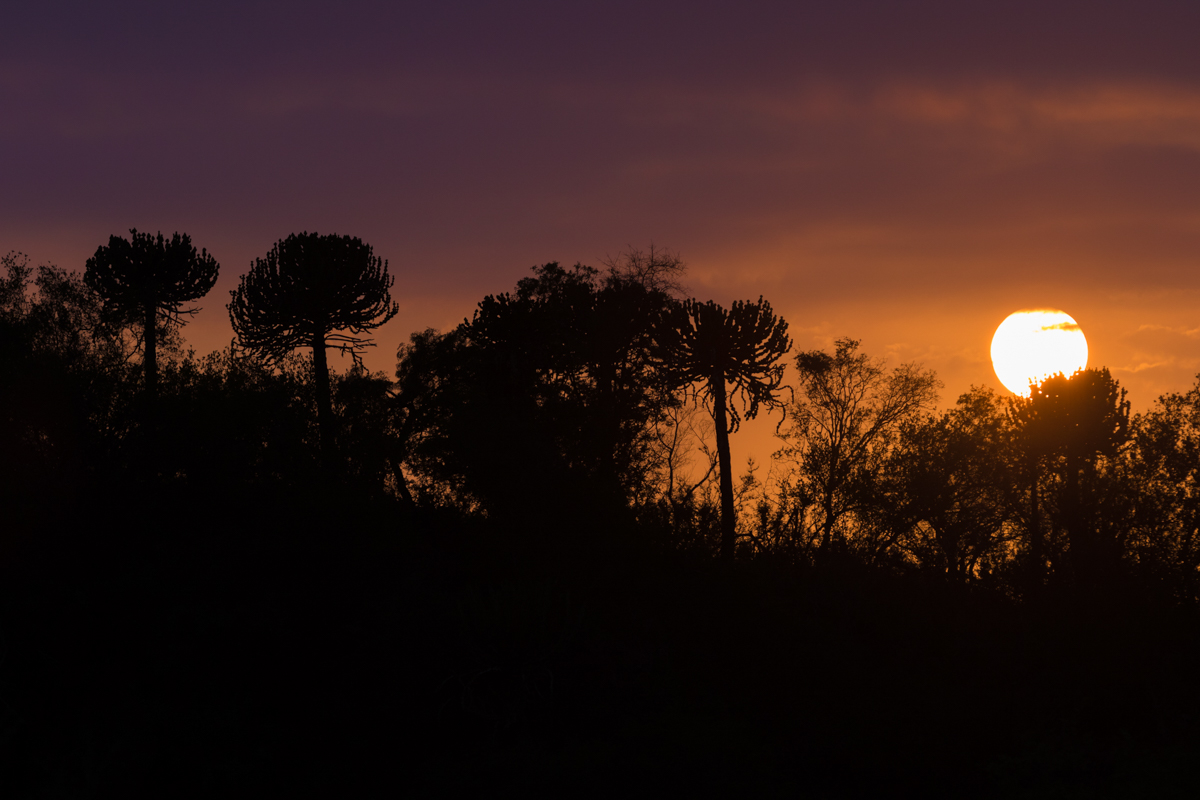 I never tired seeing a classic Lebombo sunrise with silhouetted Euphorbia trees.