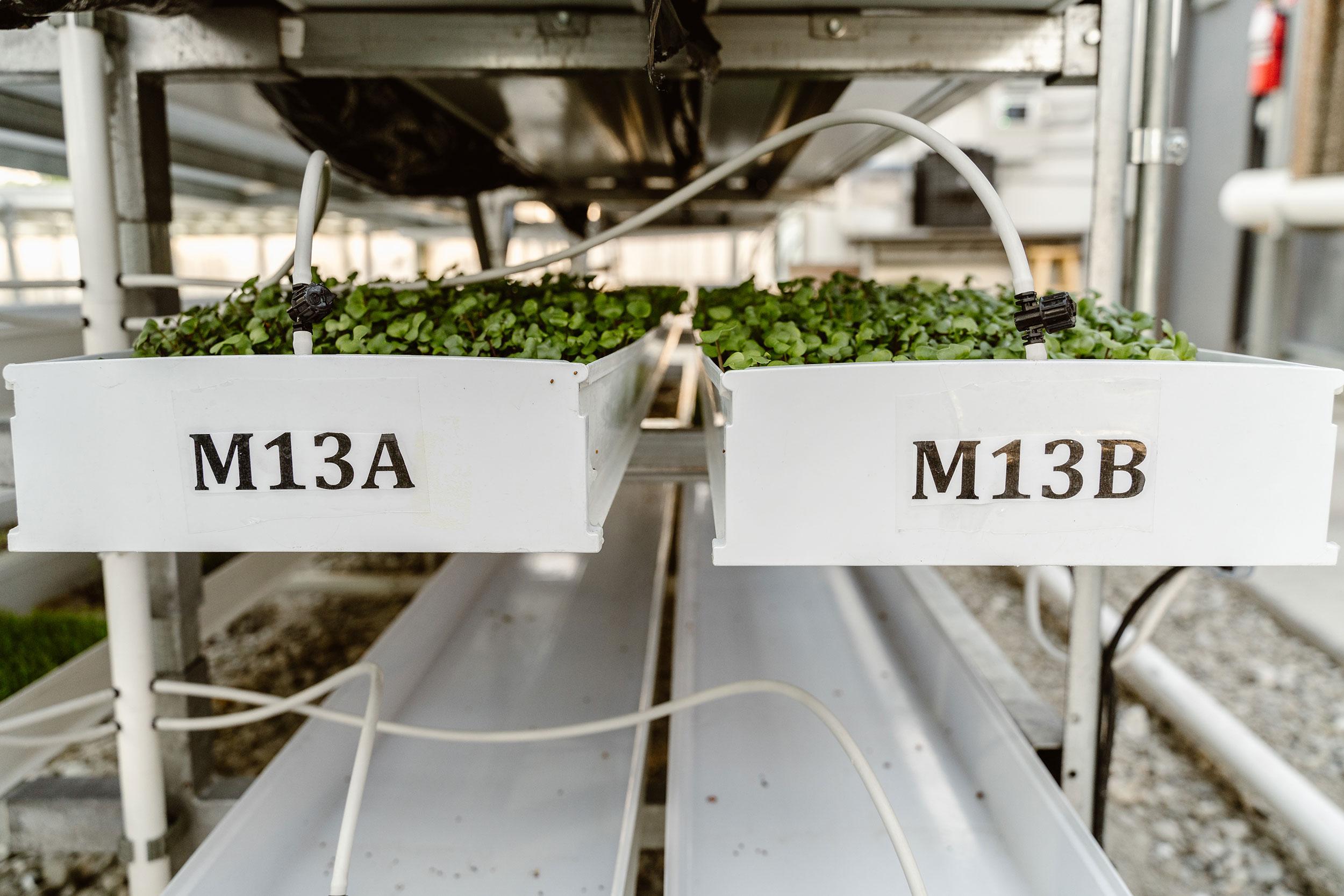 Herban-Produce-_-3-19-19-(20-of-55).jpg