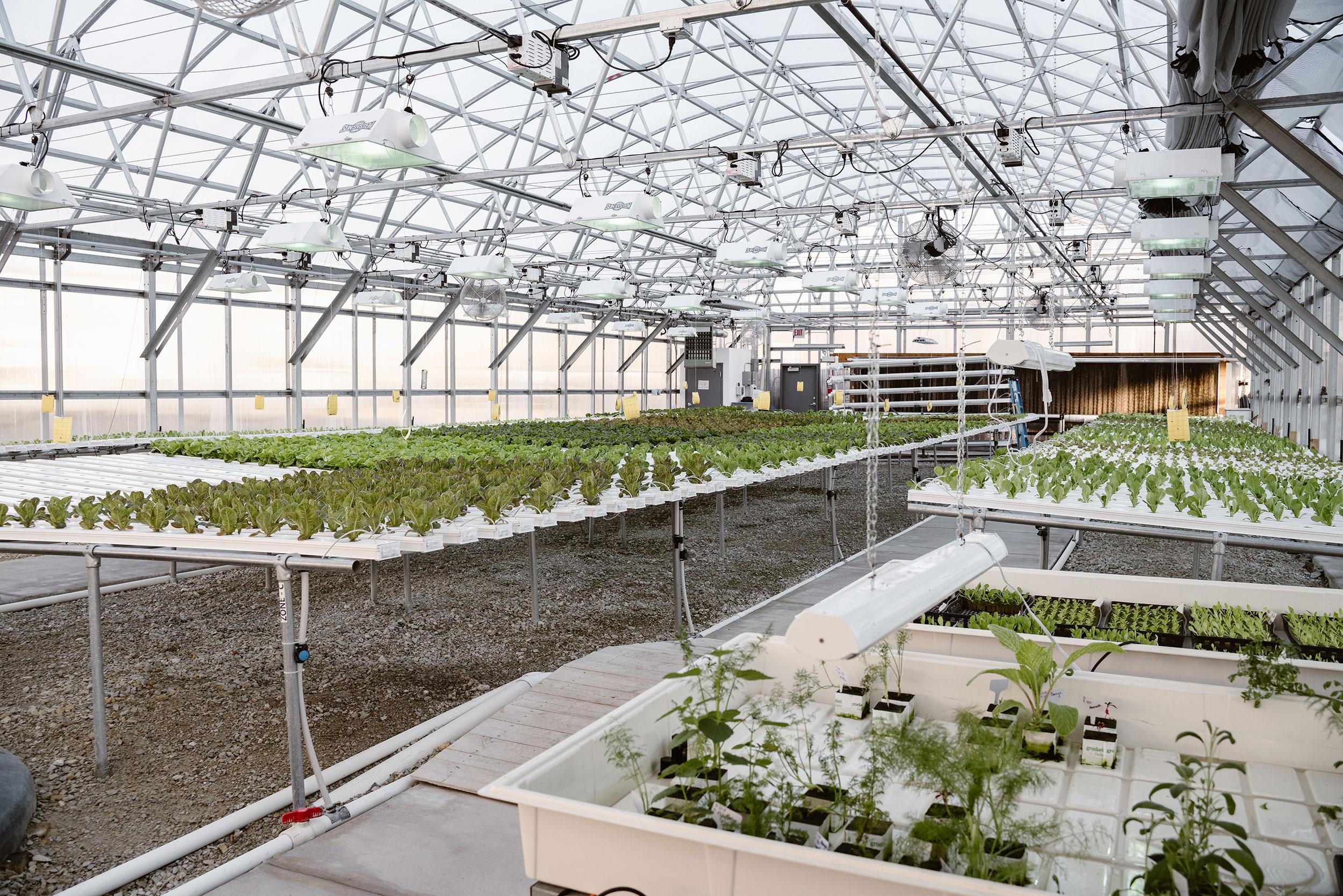 Herban-Produce-_-3-19-19-(5-of-55).jpg