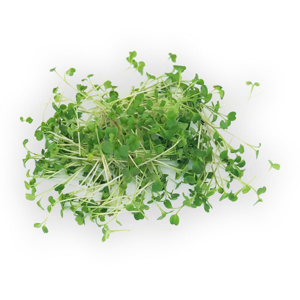 Arugula microgreens from Herban Produce urban farm in Chicago.