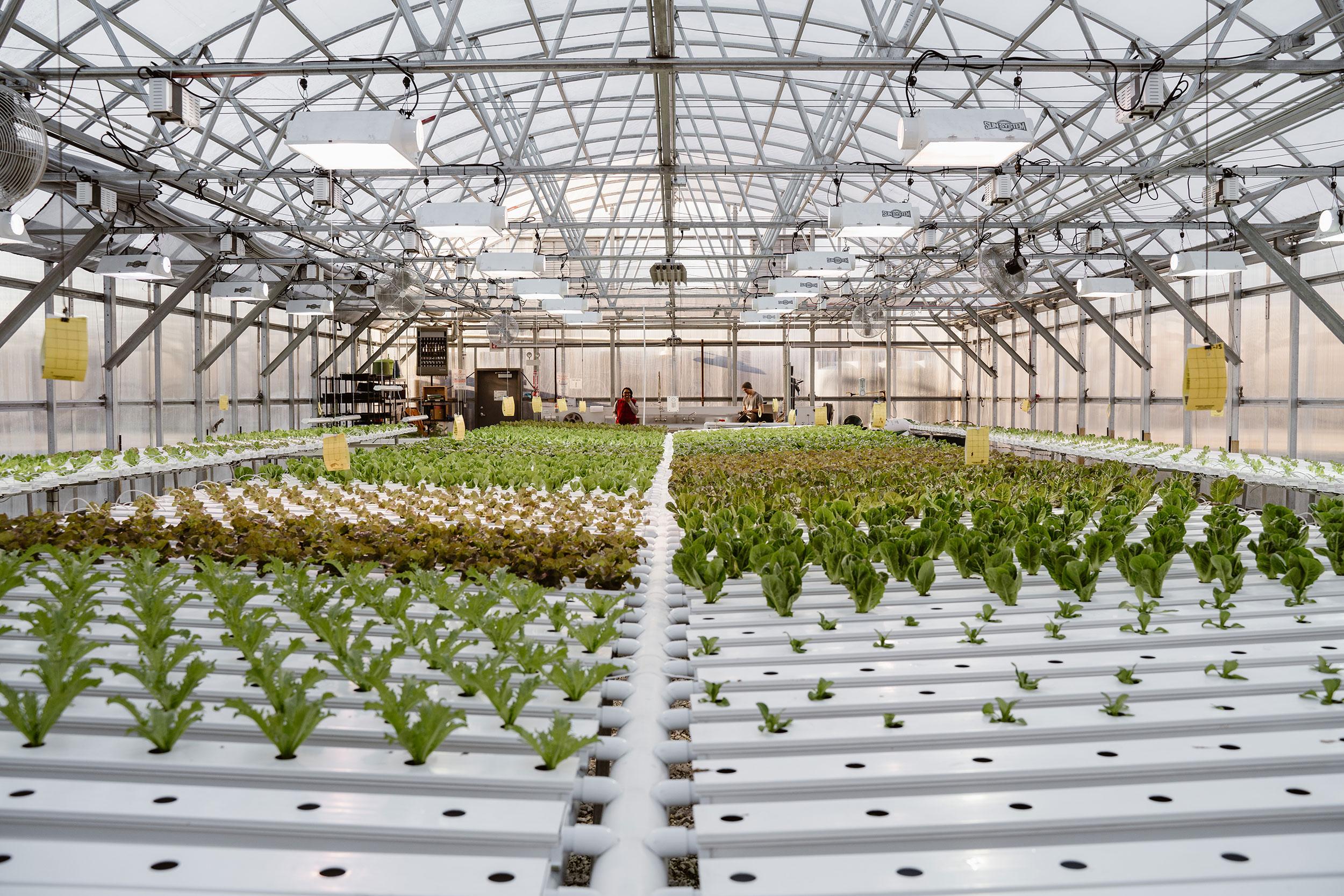 Herban-Produce-_-3-19-19-(12-of-55).jpg