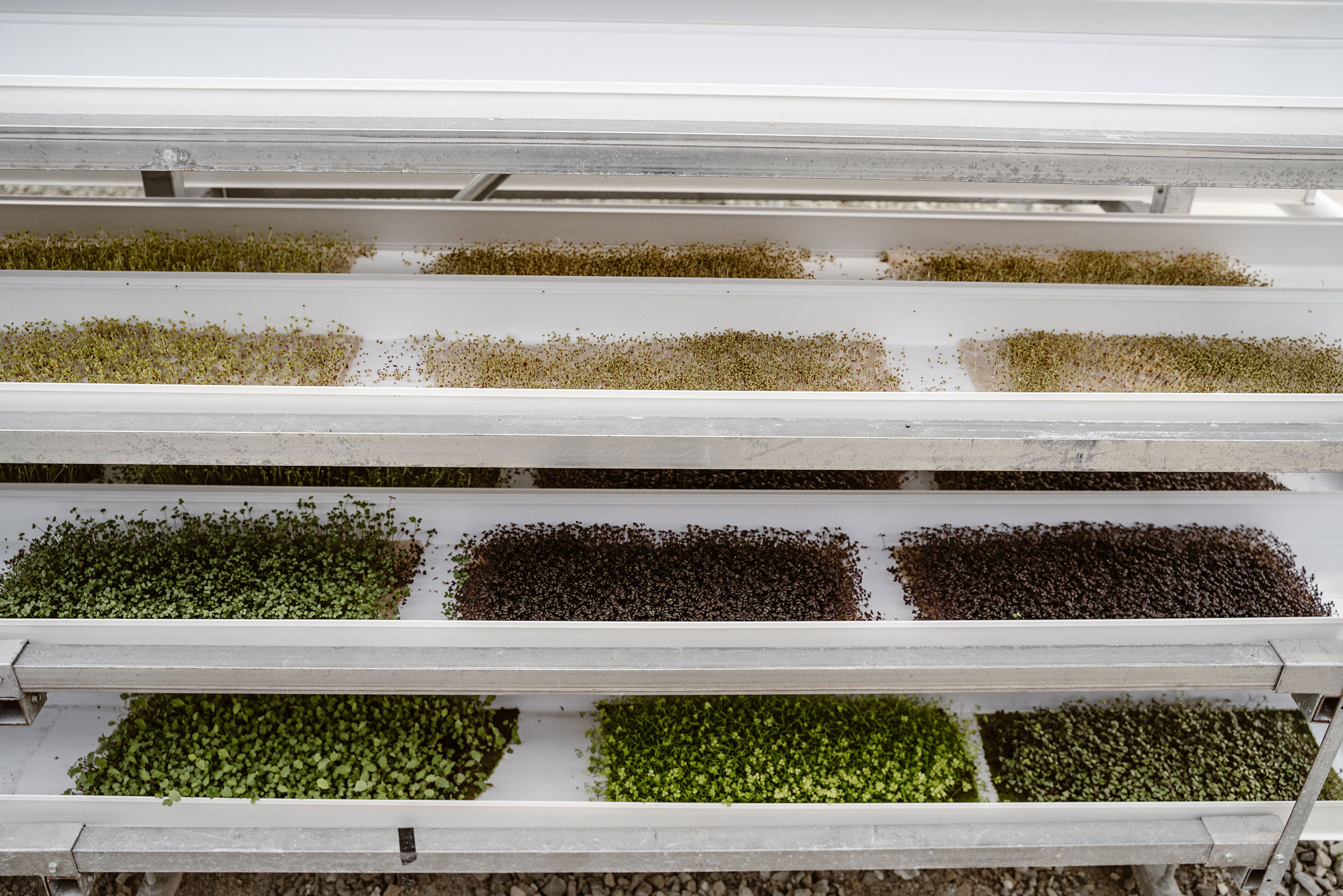 Herban-Produce-_-3-19-19-(39-of-55).jpg