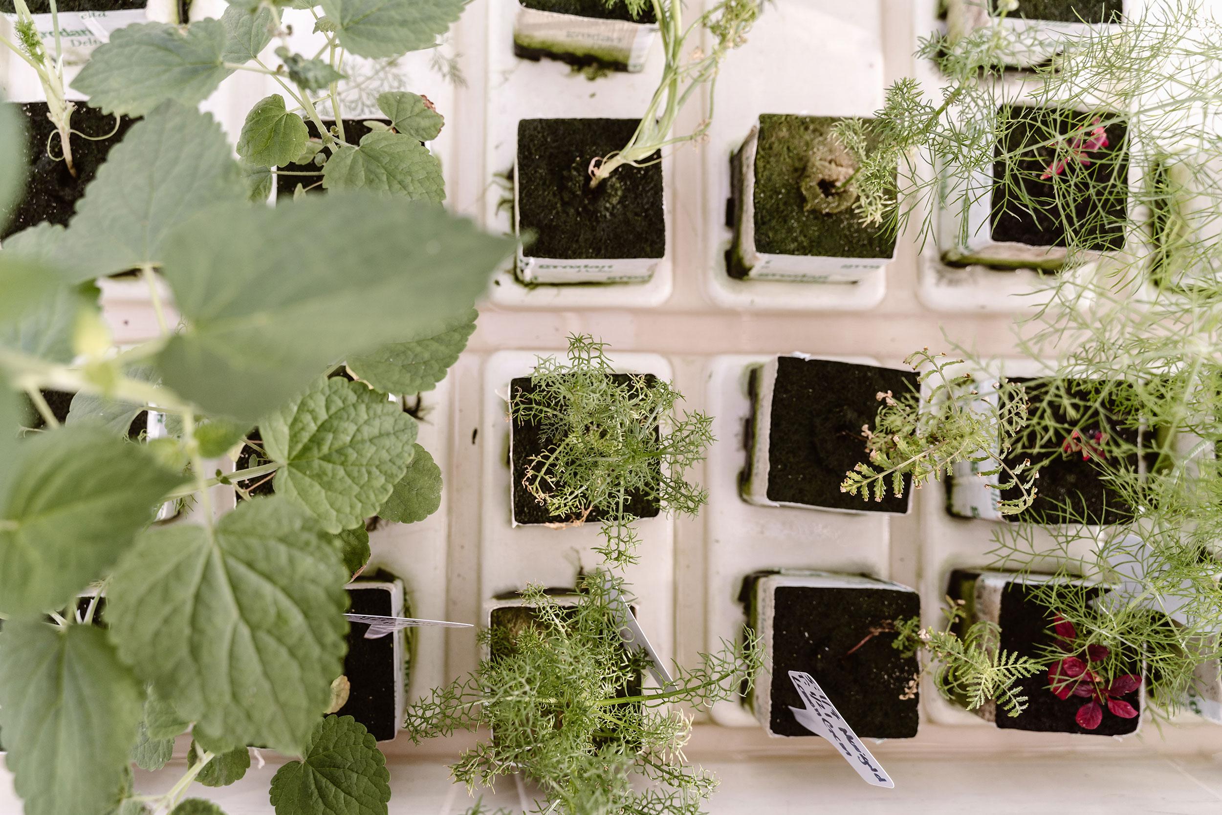 Herban-Produce-_-3-19-19-(54-of-55).jpg