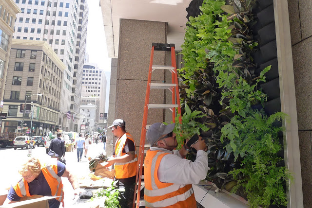 "Plants On Walls Installs - 128"" x 123"" vertical garden, living wall. 100 Pine Street. San Francisco."
