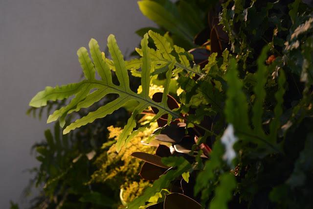 Chris Bribach, Plants On Walls, CBRE San Francisco, Florafelt System