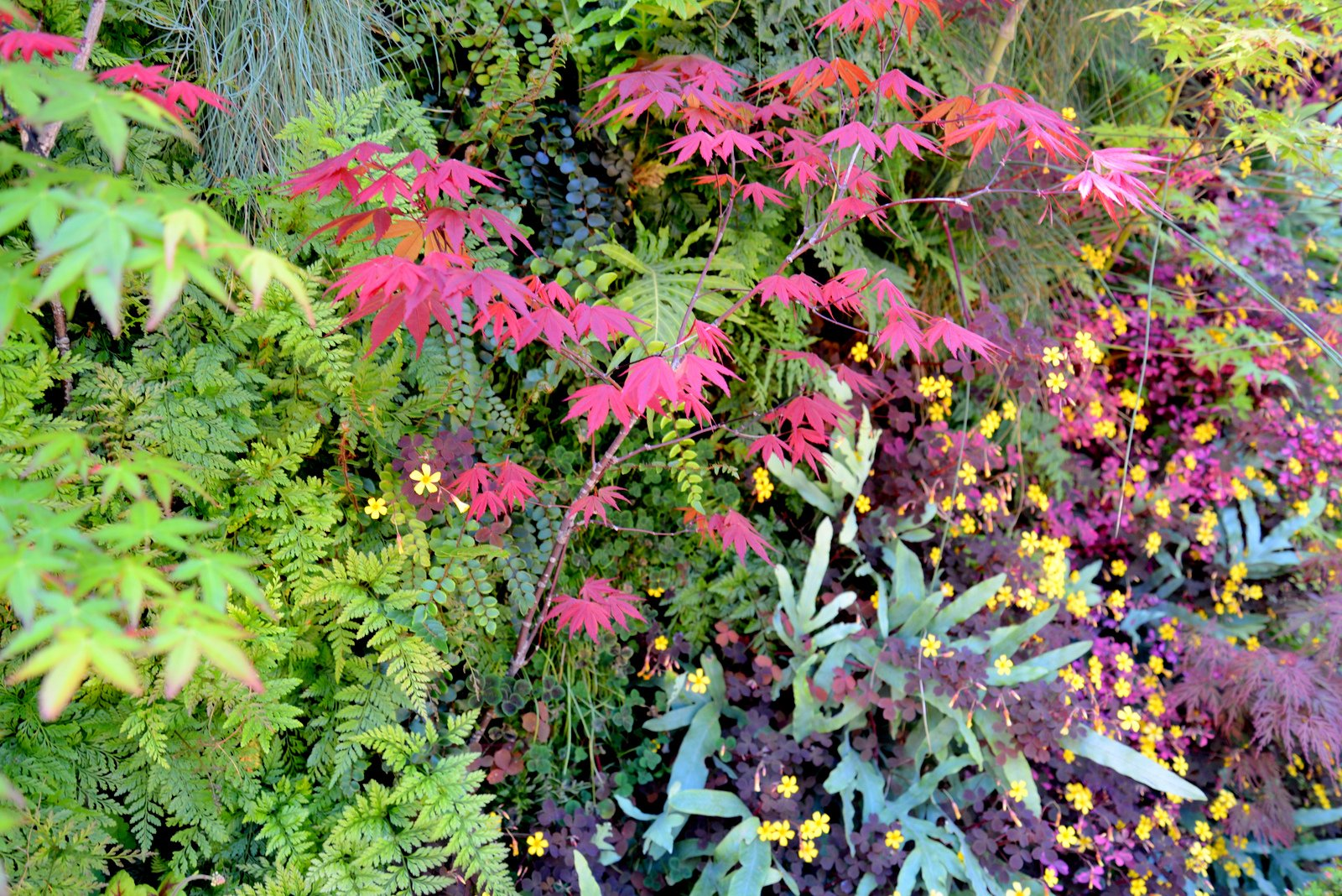 Davis Dalbok, Living Green Design, Florafelt System