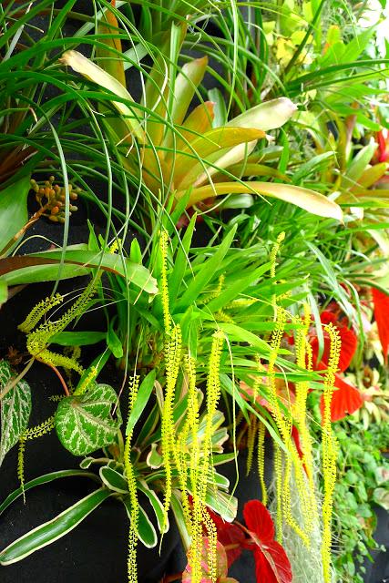 San Francisco Conservatory of Flowers. Florafelt System