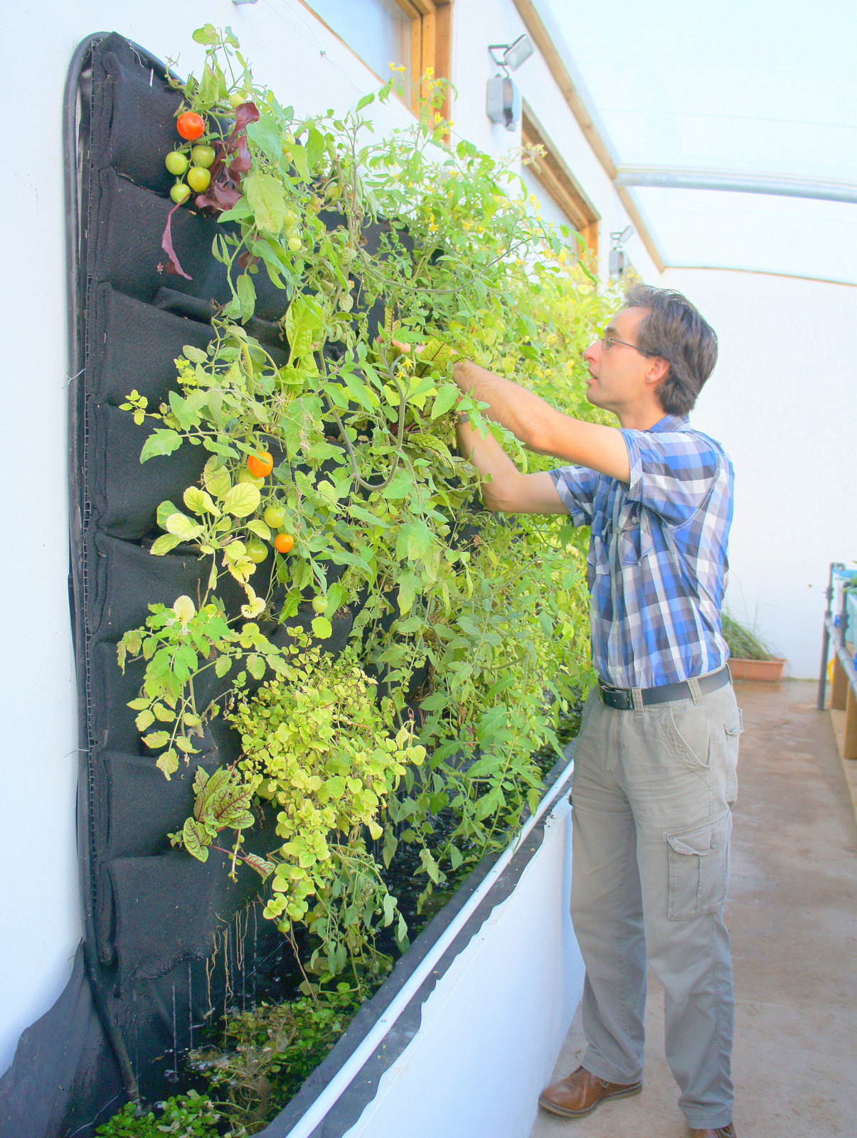 Stephen Schofield of Eden Green Walls. Humber By Nature.Solar Aquaponic Greenhouse, Florafelt System