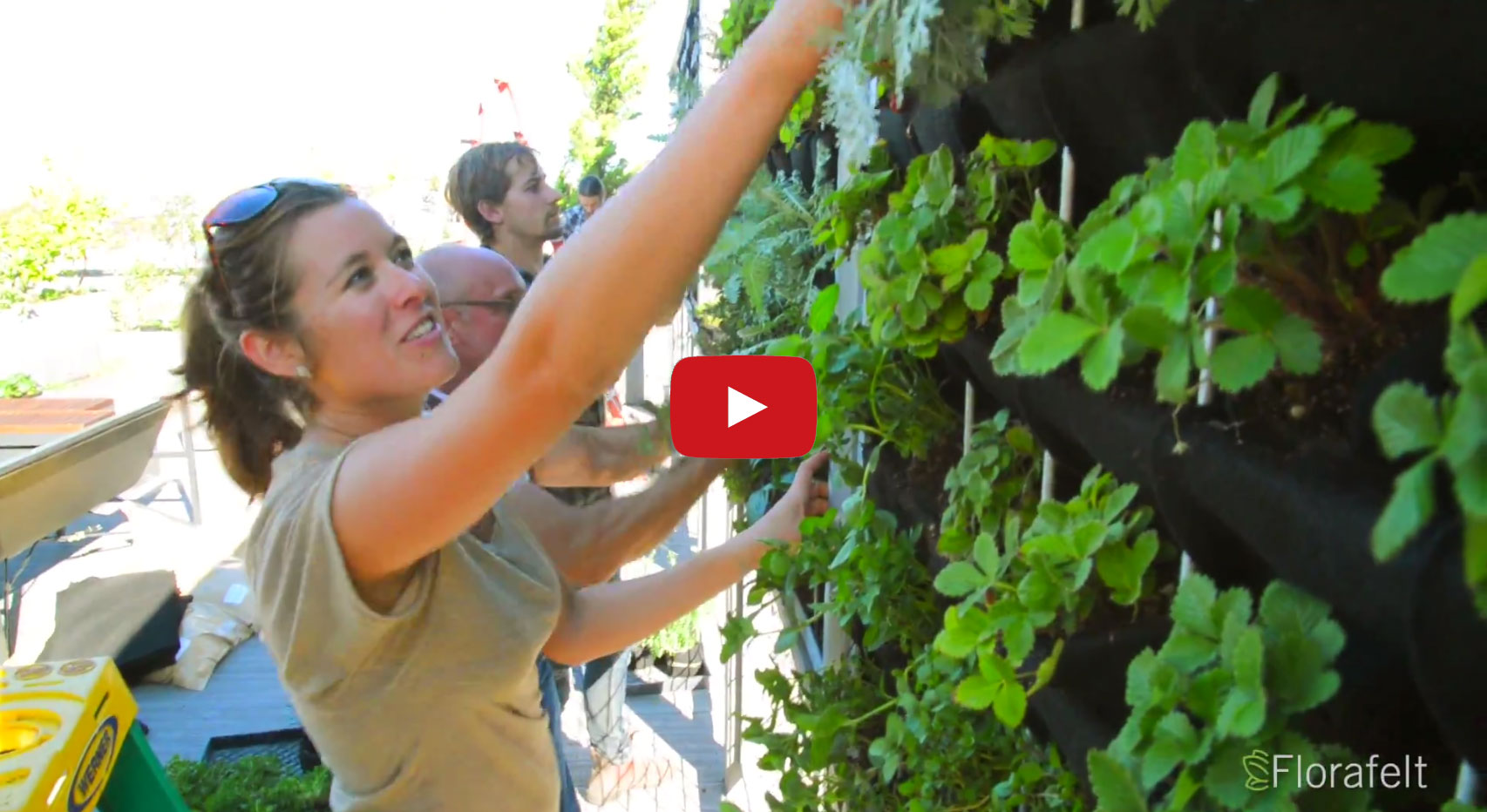 VIDEO: Vertical Herb Garden for Bartenders.  A mix of herbs served fresh for the perfect garnish for glass. Brandon Pruett, Rachel Farinelli and Lindsey Graves from Living Green Design created a custom vertical plant wall for Anchor Brewing Company's cocktail tasting rooftop lounge.
