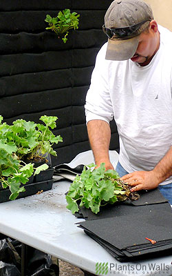 Root-Wrapped plants let you make changes easily.