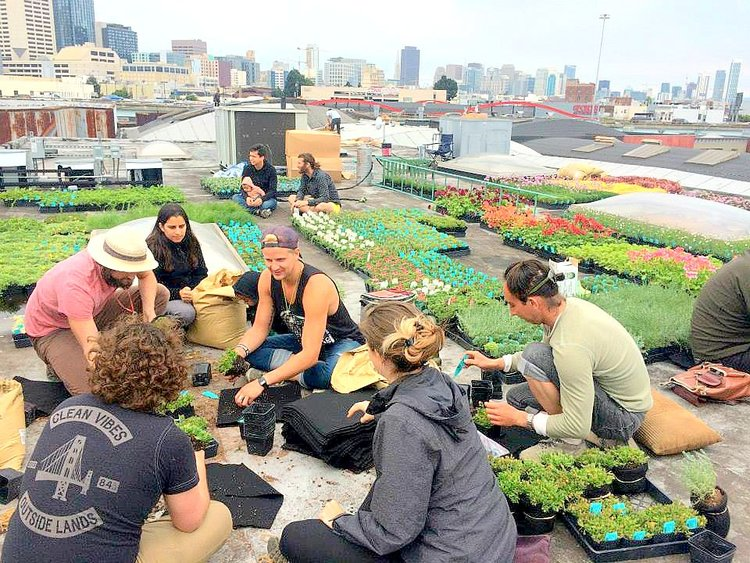 Urban Renewal volunteer root-wrapping team led by Amanda Goldberg and Brandon Pruett.