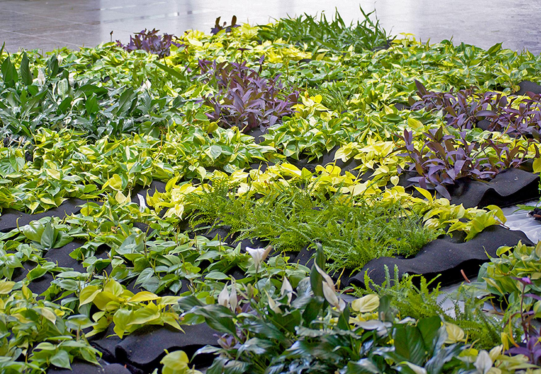Planterra Canada. Florafelt Vertical Garden Planters