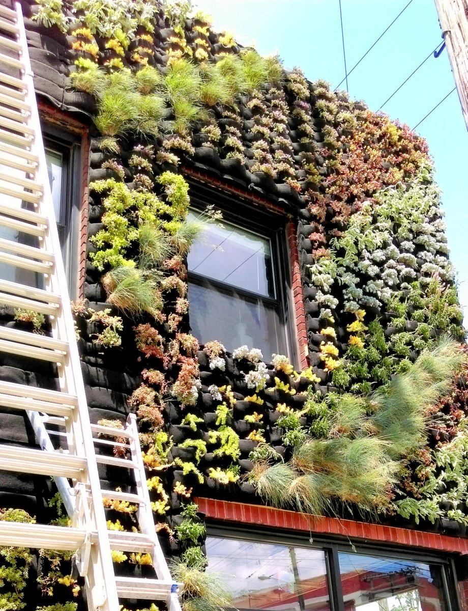 Architect Marika Shioiri-Clark. Hingetown Cleveland Living Wall. Florafelt Vertical Garden System.