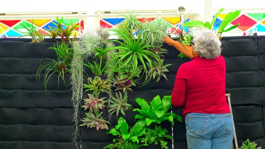 Guadalupe Cota, Senior Nursery Specialist. Conservatory of Flowers, San Francisco.