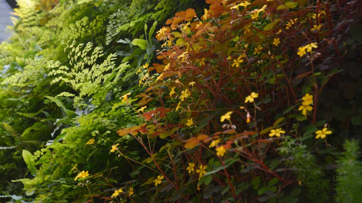 Florafelt Pro System Vertical Garden by Tim O'Shea for a San Francisco Residence.