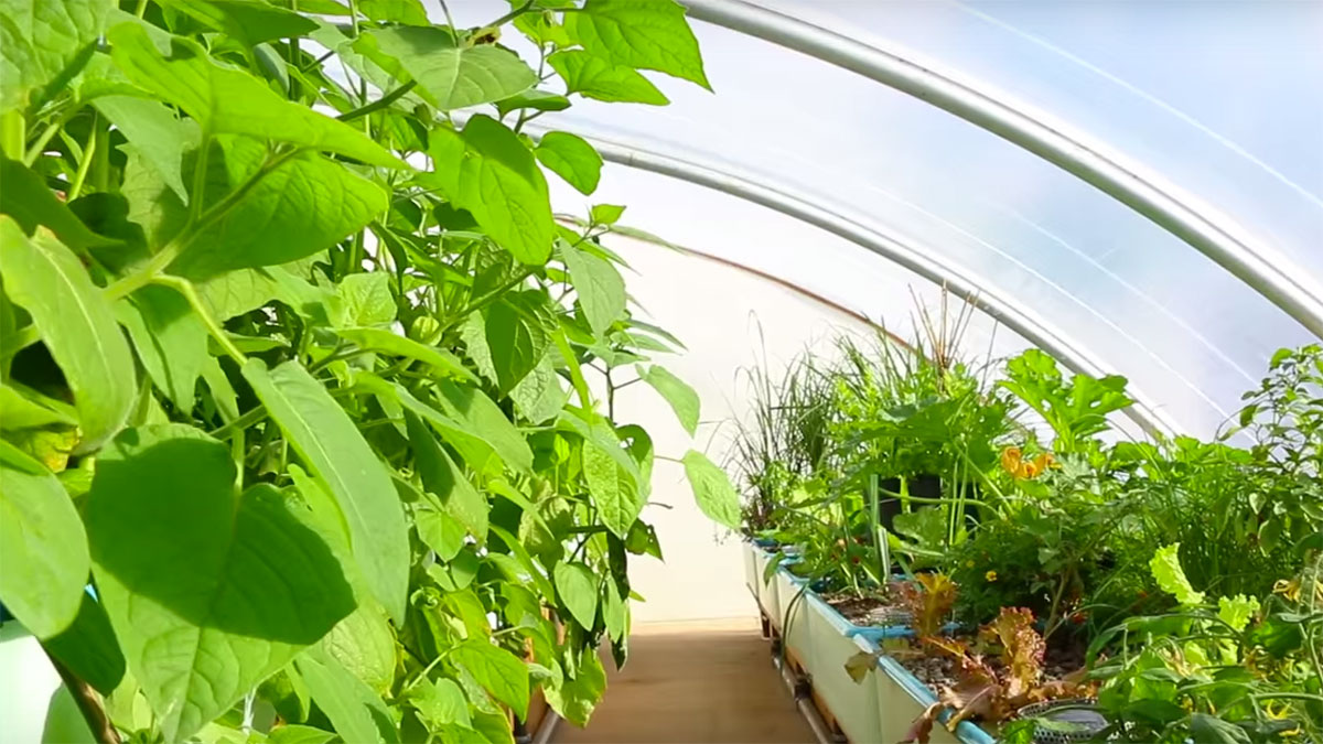 Humble By Nature Aquaponics Greenhouse and Cafe. Florafelt Vertical Garden Planters.