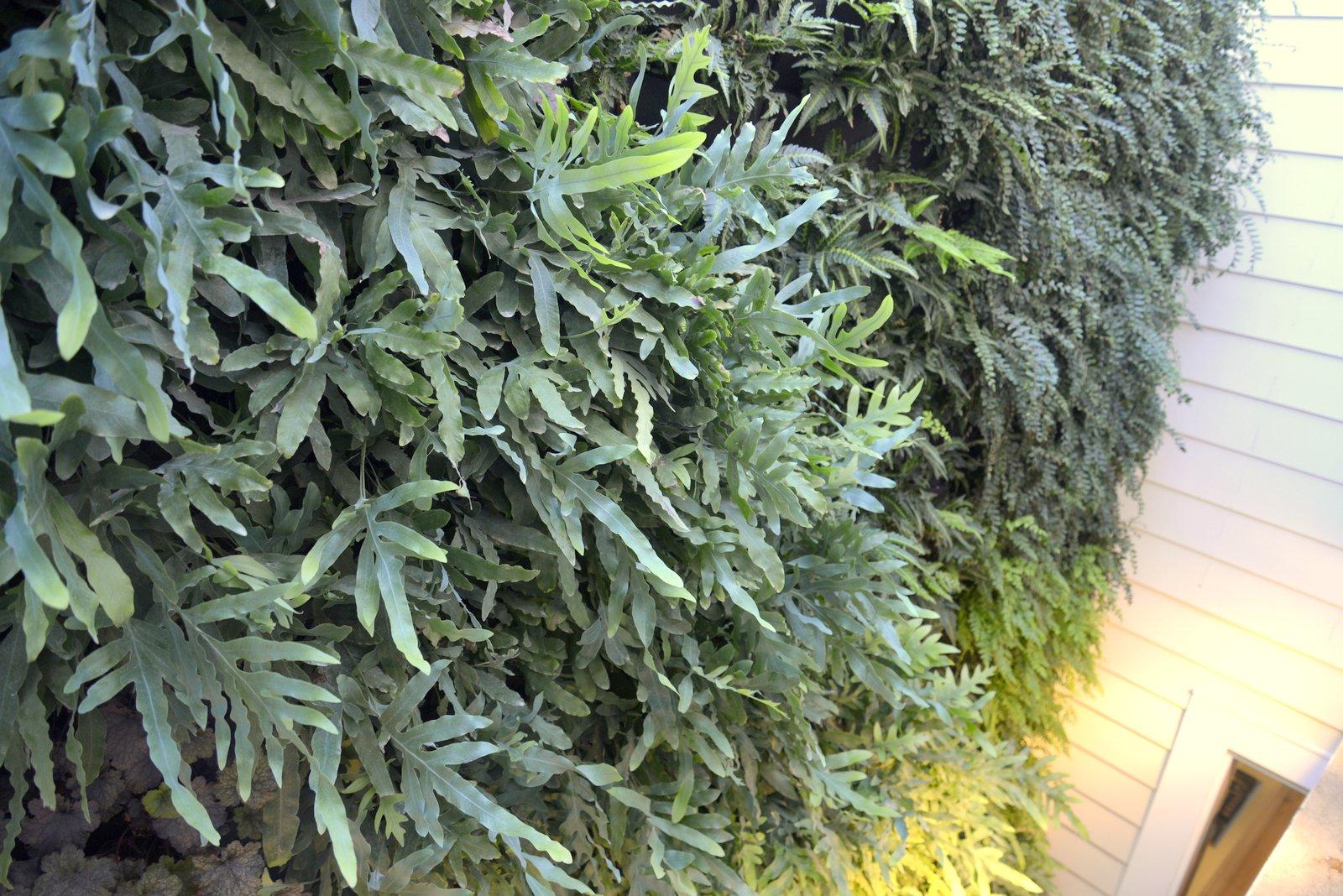 Florafelt-Vertical-Garden-Living-Wall-Belevedere-Street-06-_CJB3492.JPG