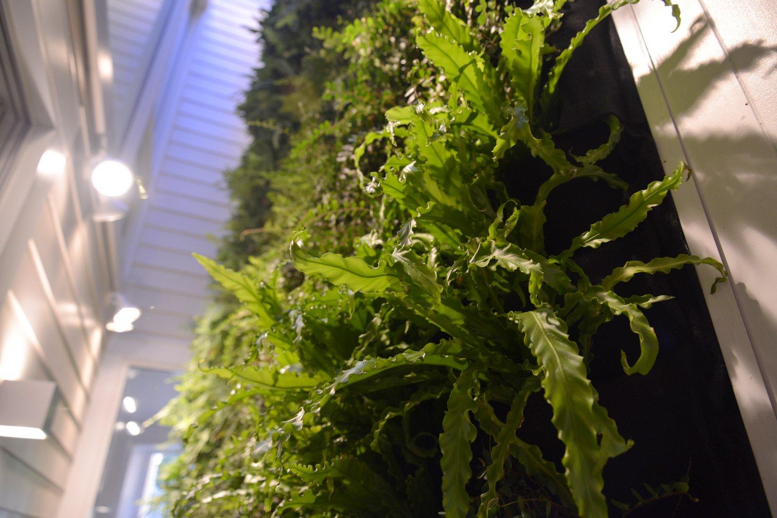 Florafelt-Vertical-Garden-Living-Wall-Belevedere-Street-08-_CJB3512.JPG