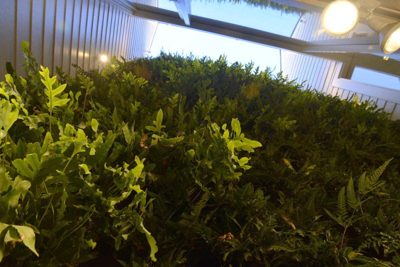 Florafelt-Vertical-Garden-Living-Wall-Belevedere-Street-10-_CJB3506.JPG