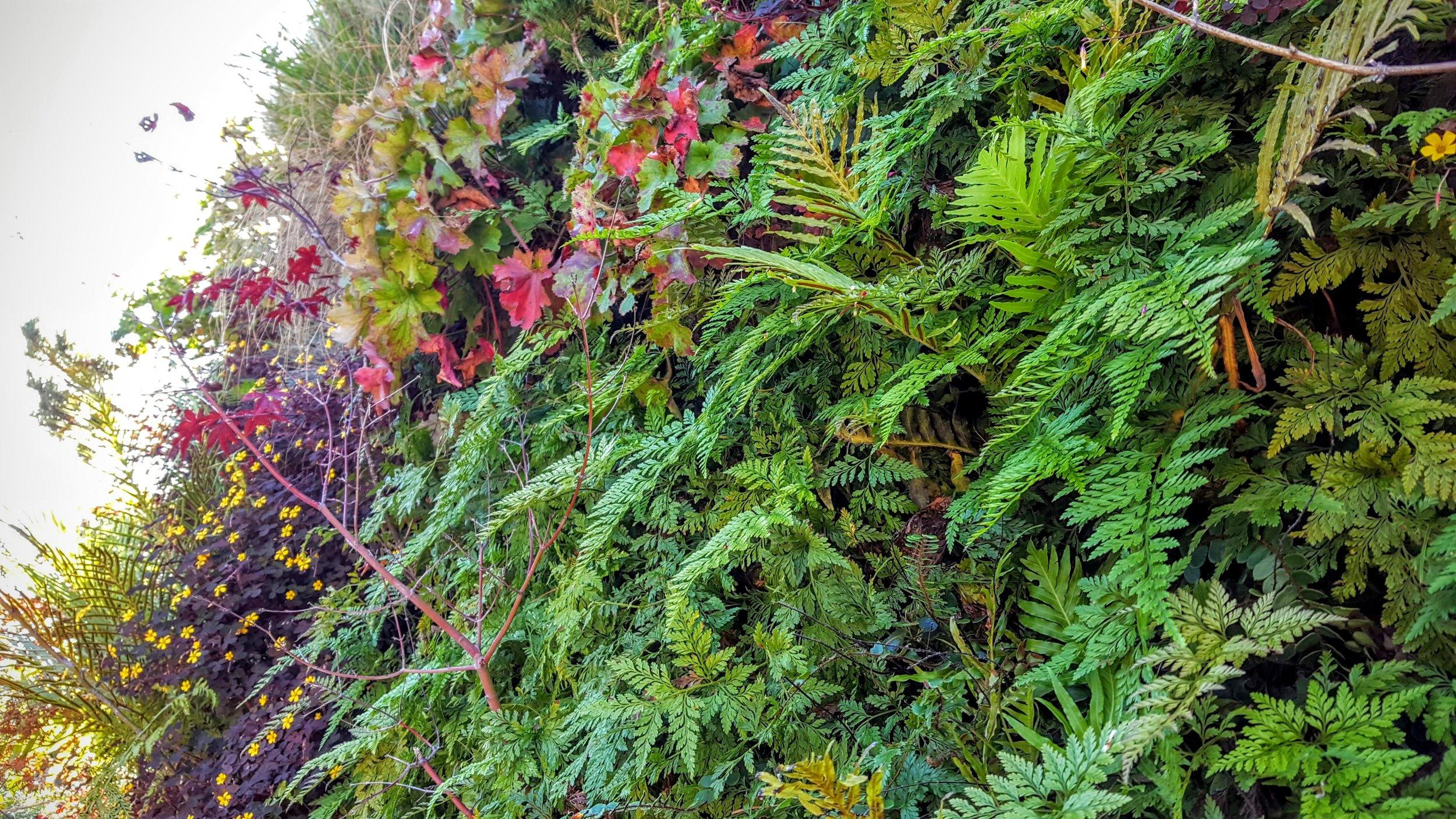 Florafelt-Pro-System-Vertical-Garden-Brandon-Pruett-Living-Walls-Living-Green-Design-20161108_092918.jpg