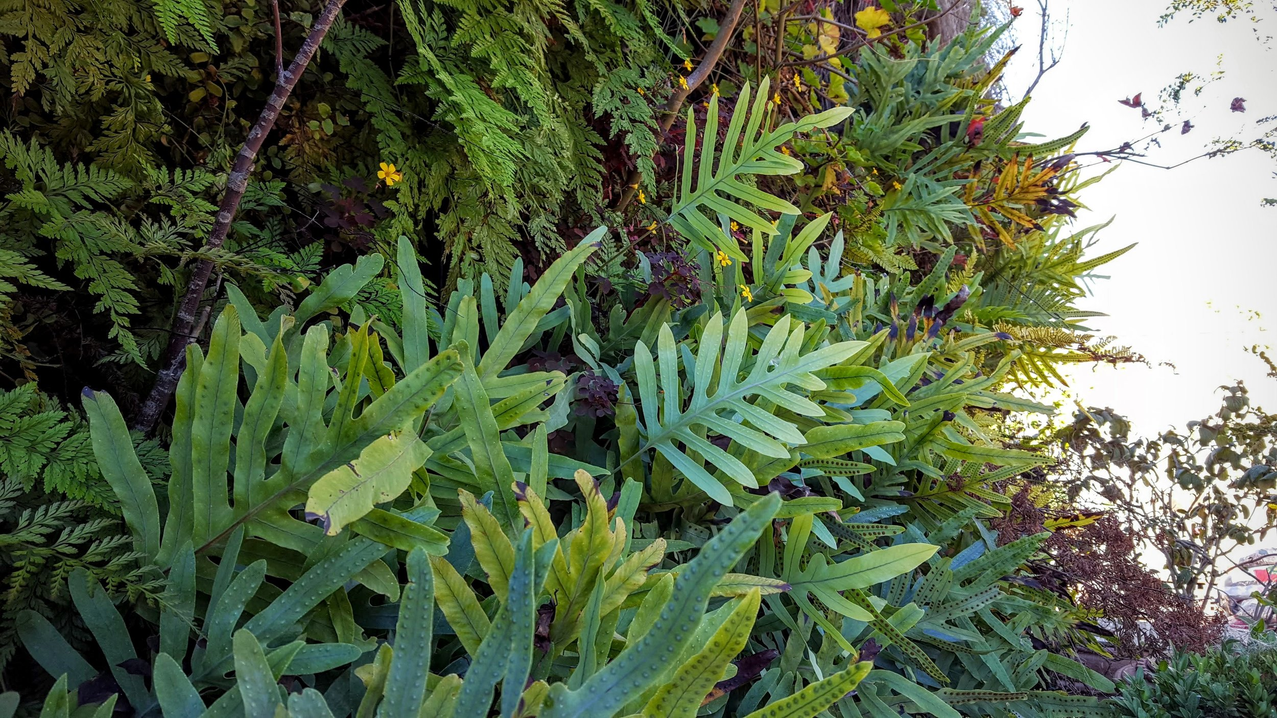 Florafelt-Pro-System-Vertical-Garden-Brandon-Pruett-Living-Walls-Living-Green-Design-20161108_092925.jpg