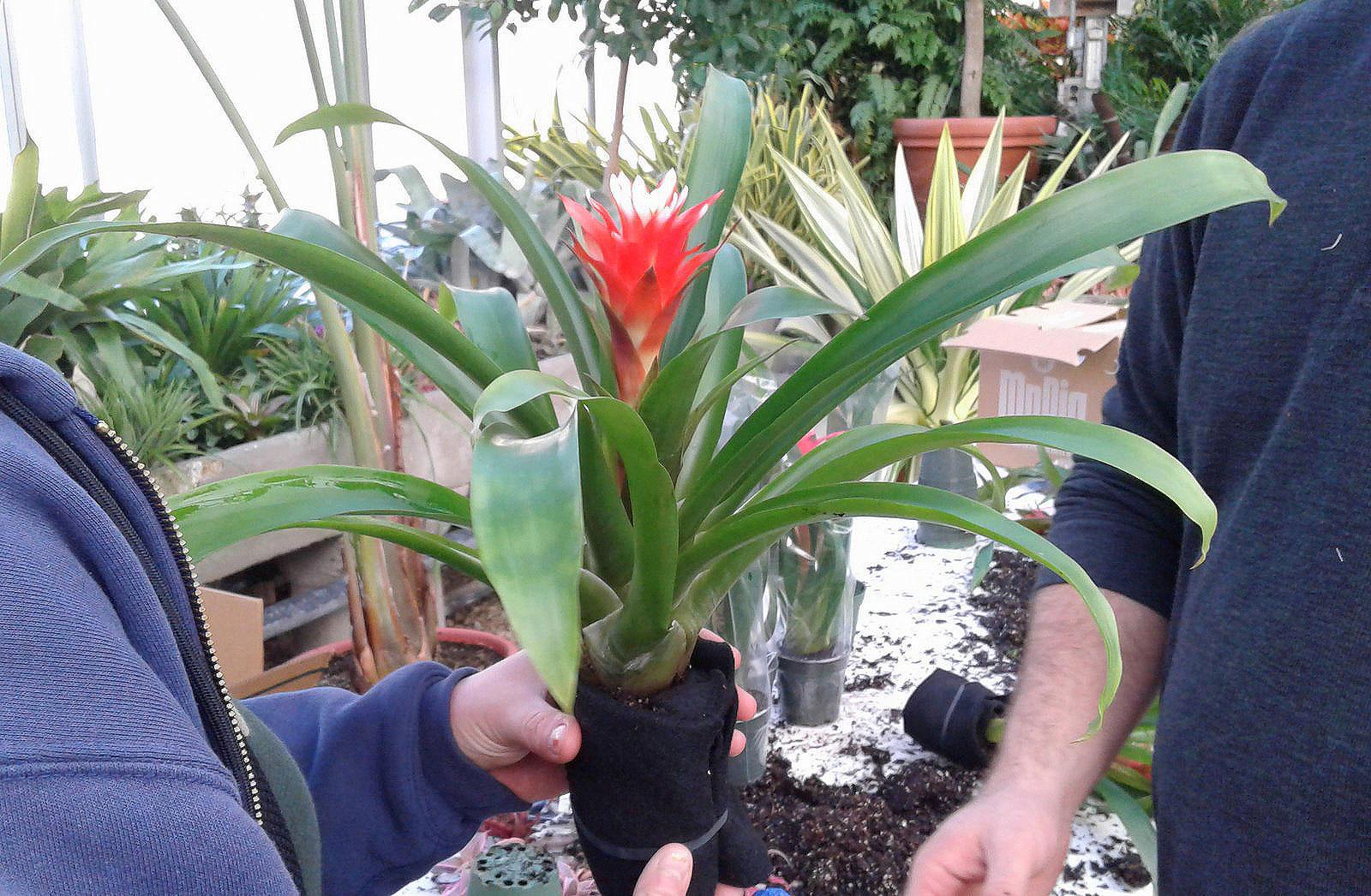Florafelt Vertical Garden at Kingwood Center Gardens